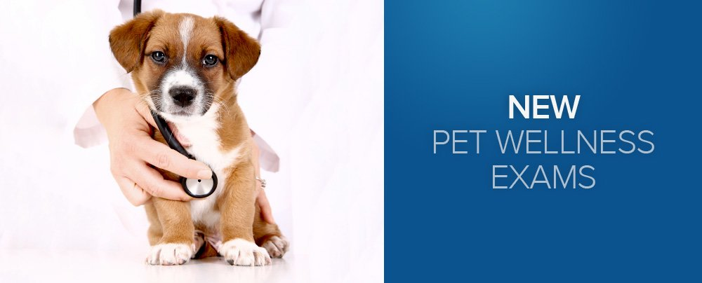 New Pet Wellness Exams