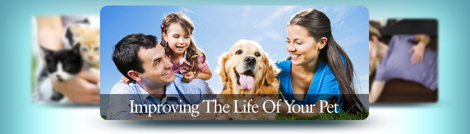 Improving The Life Of Your Pet