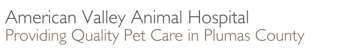 American Valley Animal Hospital