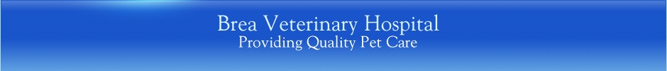 Brea Veterinary Hospital