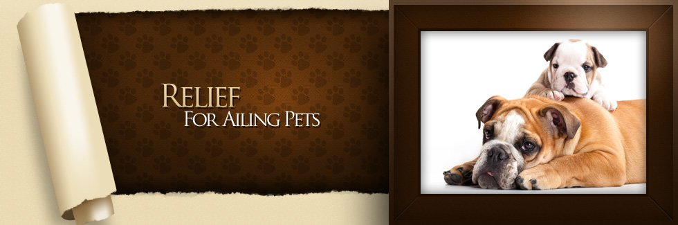 Relief For Ailing Pets