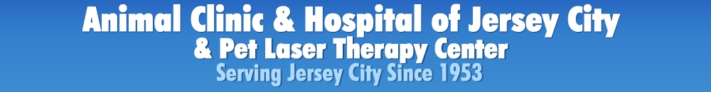 Animal Clinic & Hospital of Jersey City
