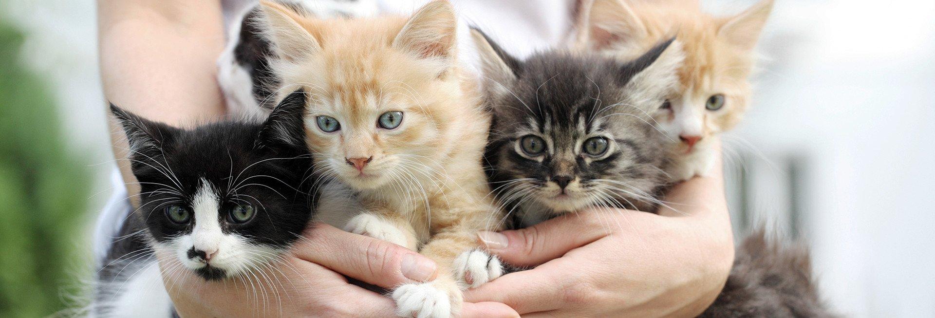Cat Rescue Groups Memphis Tn