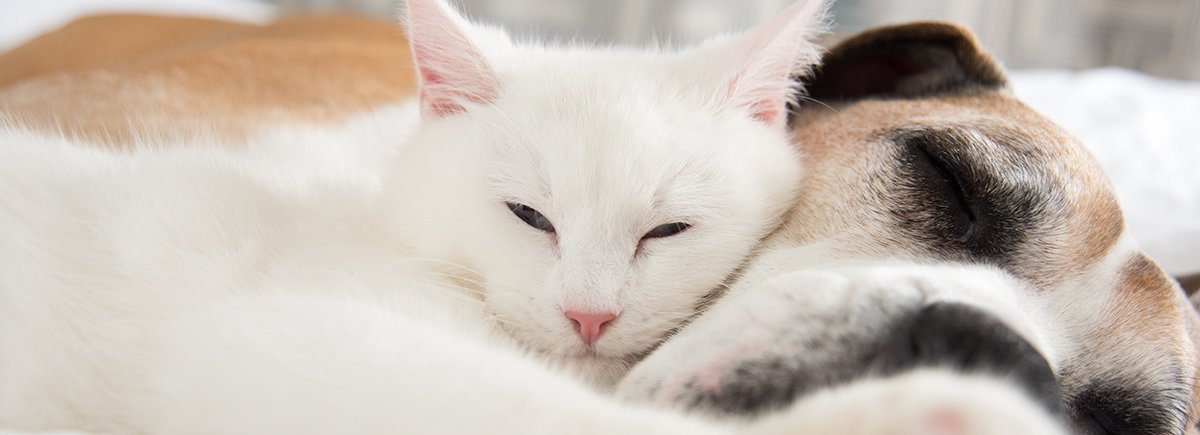 Cats | Las Vegas, NV | Animal Kindness Veterinary Hospital