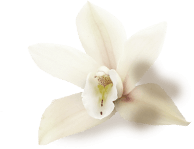 decorative orchid flower
